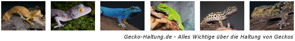 Gecko-Haltung.de